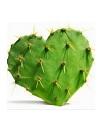 Fructul Nopalin